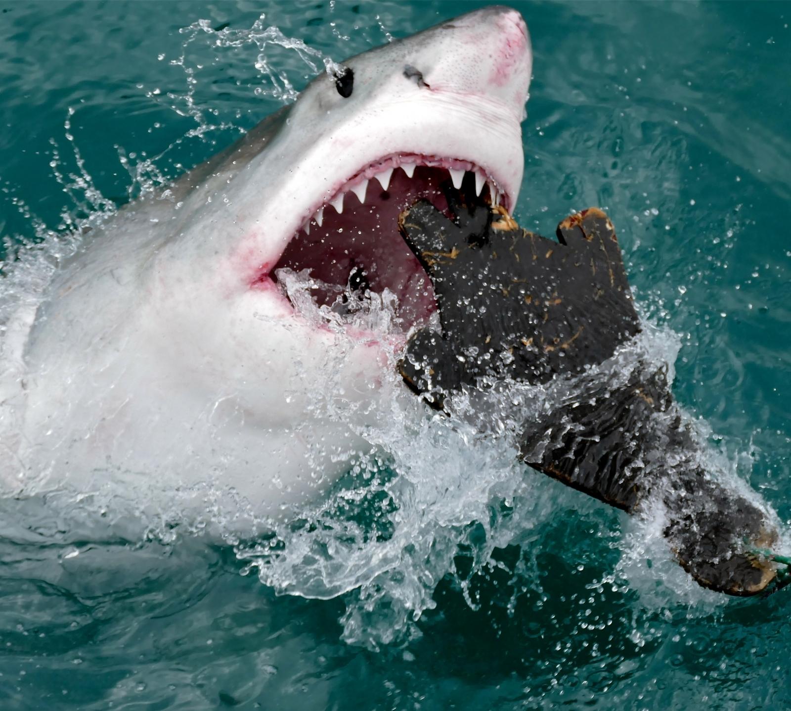 Shark Week 2017: Five amazing ways they help humans