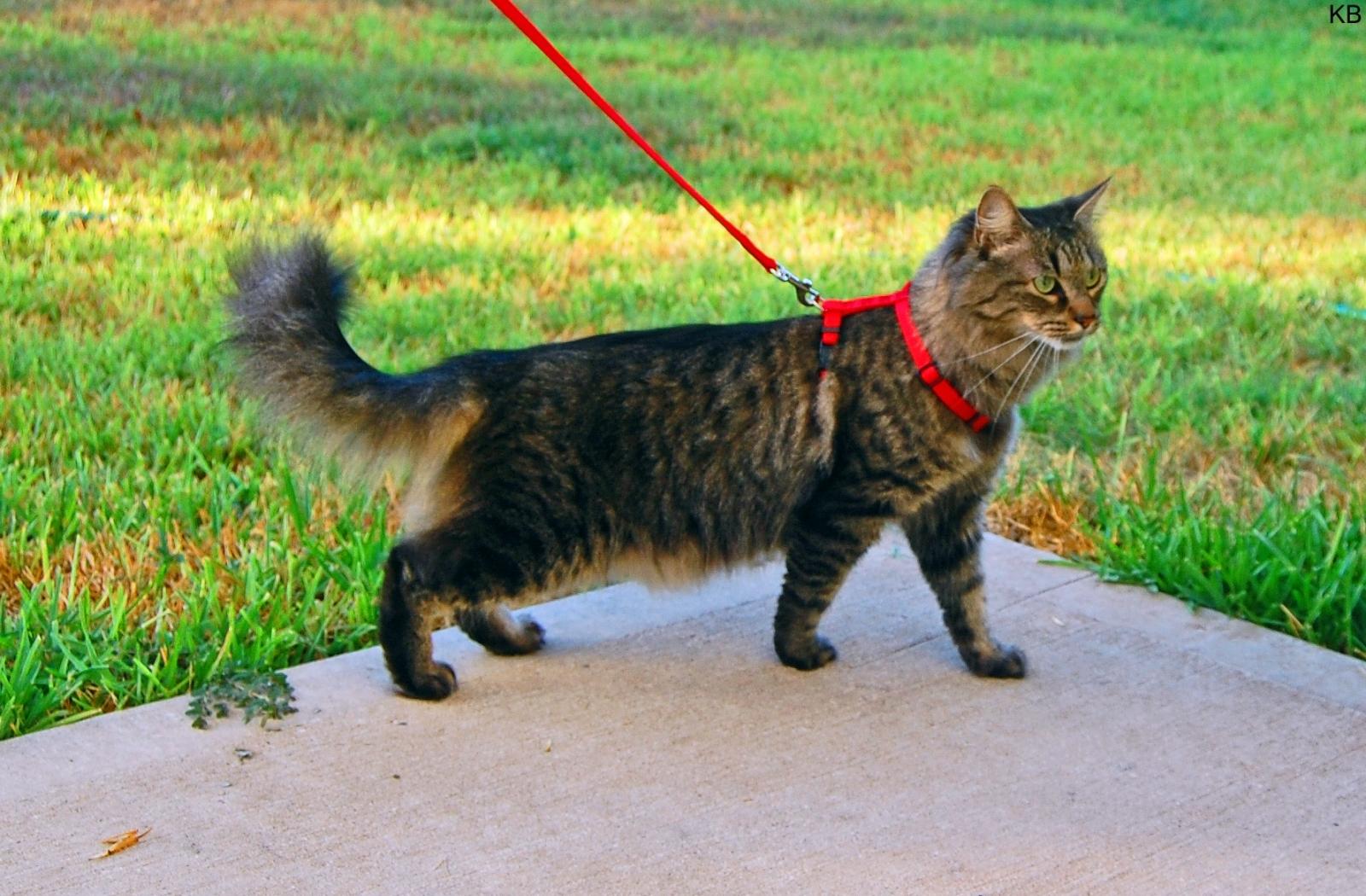 Cat Walking Through Dogs