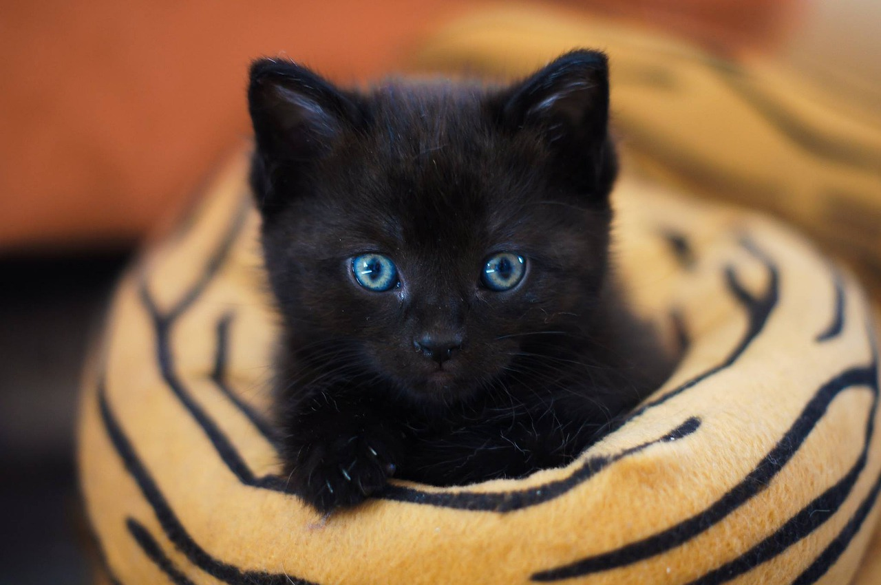 Hybrid Cat Breeds