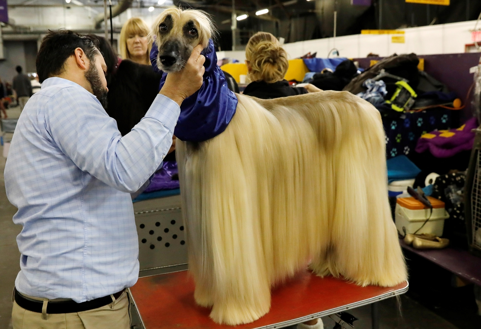 Oldest Dog To Win Westminster Dog Show