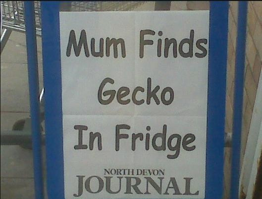 Mum Finds Gecko In Fridge