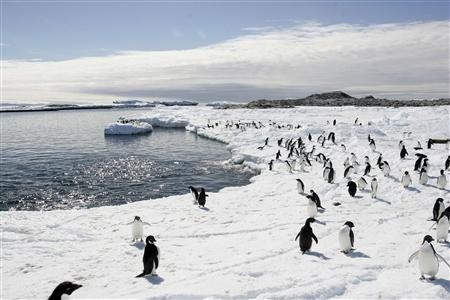 Penguins Killed In Antarctica As Iceberg Leaves Entire Colony Landlocked