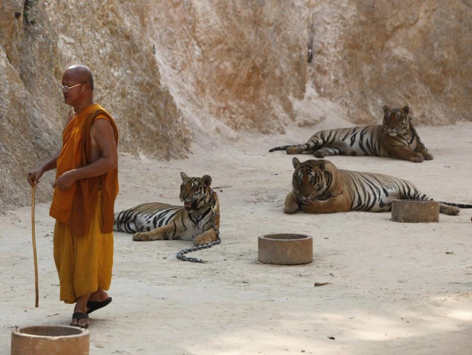 toerisme en dierenleed