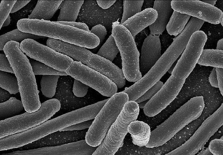 Bacteria In Ocean Water