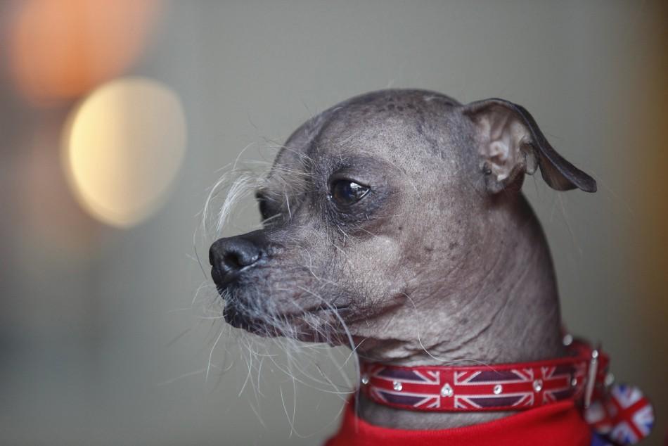 World s Ugliest Dog 20...