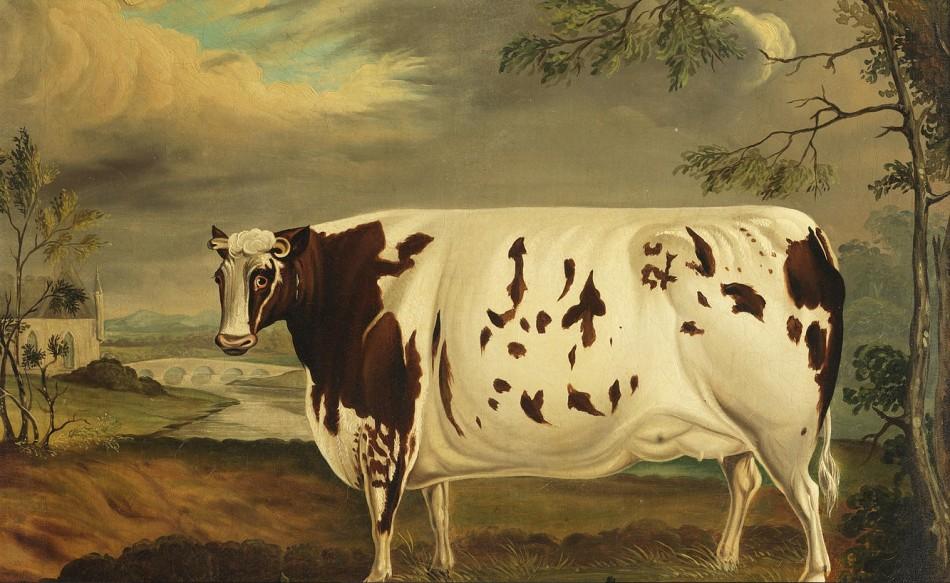 Fattest Cows Bonhams Britain's Fattest Cow
