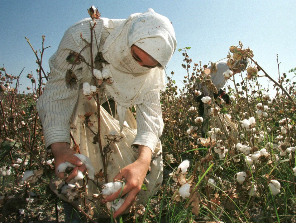 Uzbekistan Forced Cotton Picking