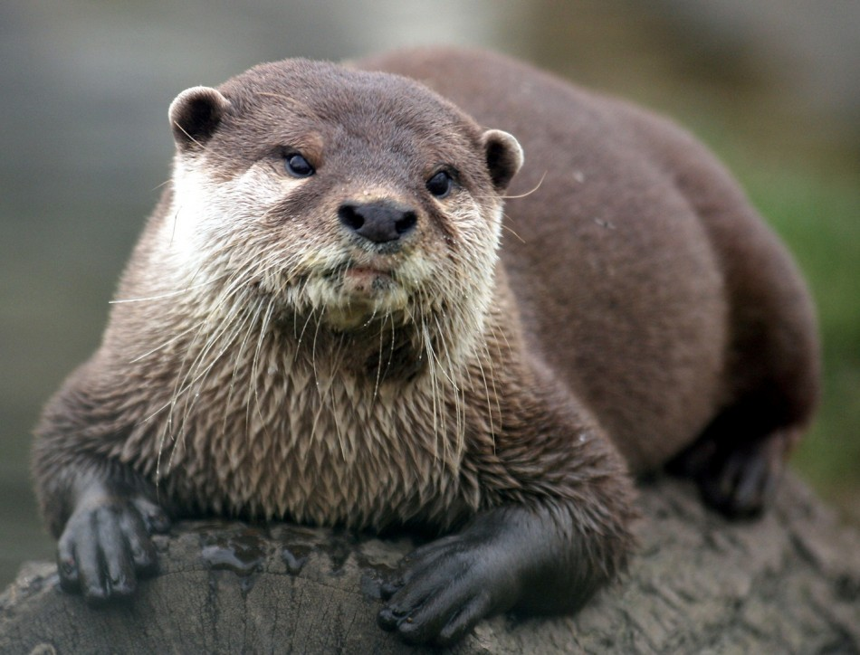 Bangor Farmer Brian Dodson Suing Environment Agency For 163 2m After Otters Ate All His Carp