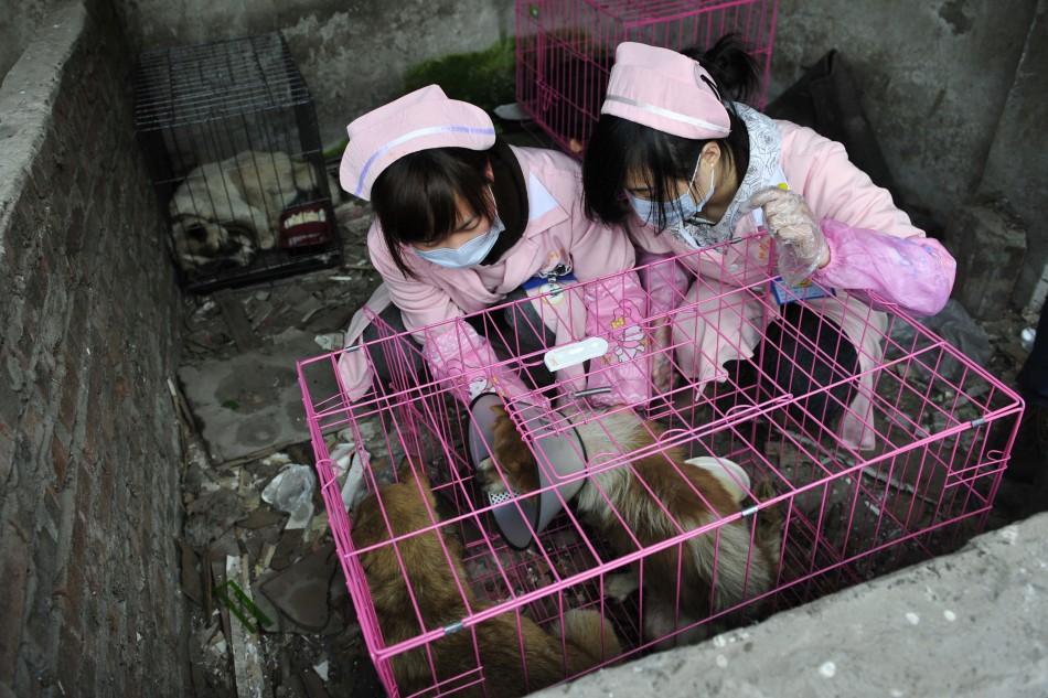 Women slaughter pigeon auction - 7b99