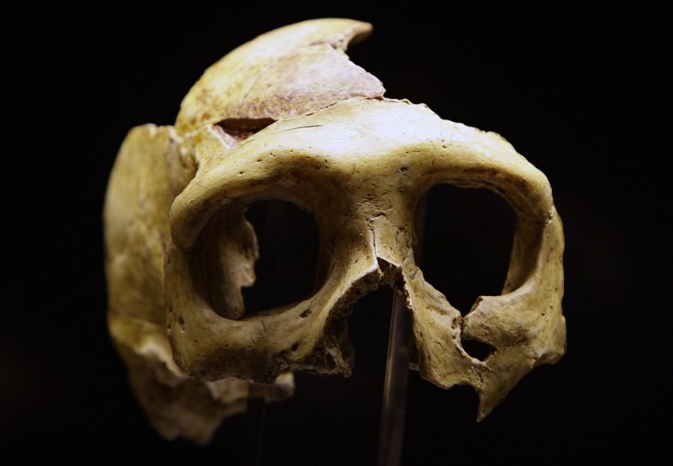 Neanderthal Man Mystery: Larger Eyes but Poor Brain ... Homo Sapiens Neanderthalensis Skull