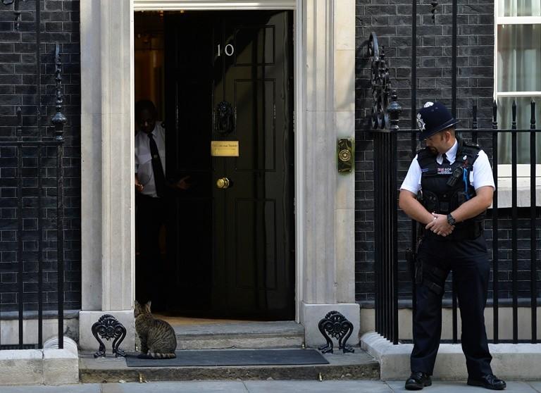 No  Downing Street Cat