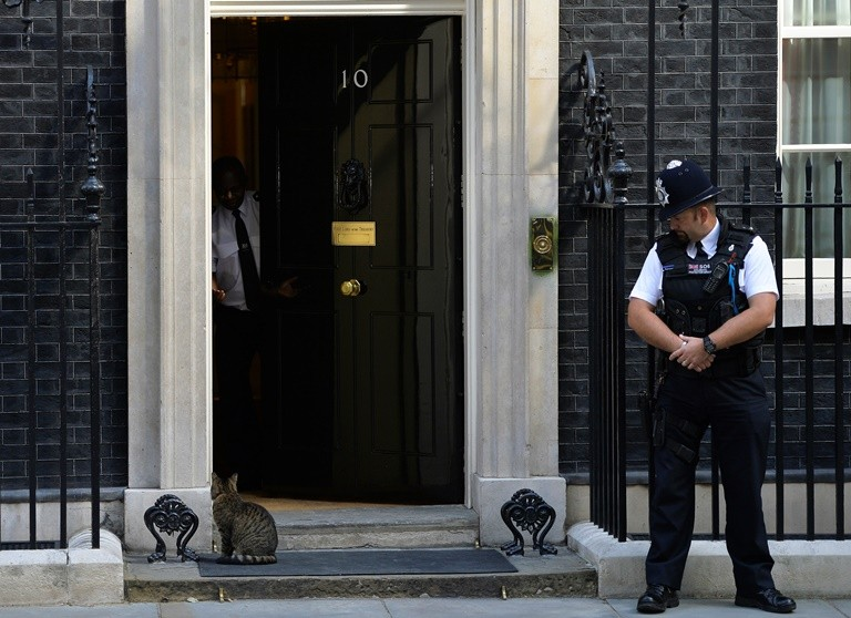 Larry the Downing Street cat