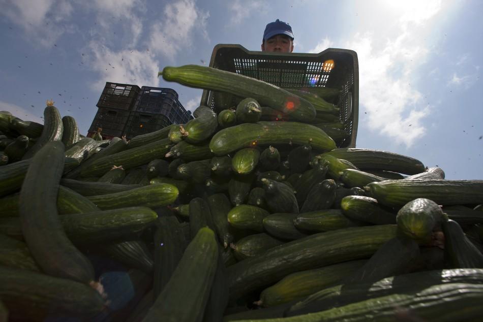 A farmer throws out a cucumber crop