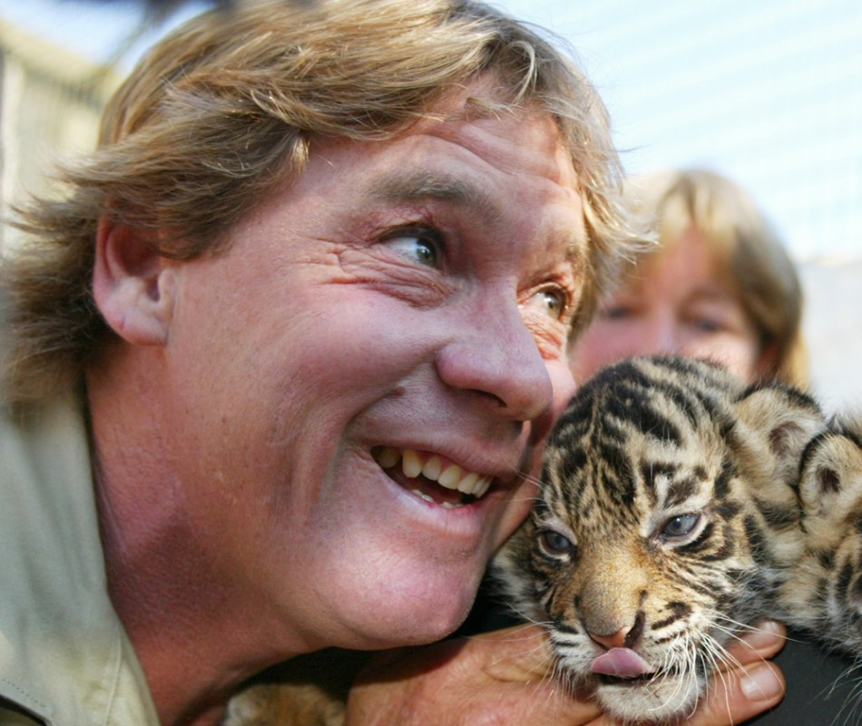 CROCODILE HUNTER STEVE IRWIN POSES WITH BABY SUMATRAN TIGER CUBS AT MOGO ZOO SOUTH OF SYDNEY.