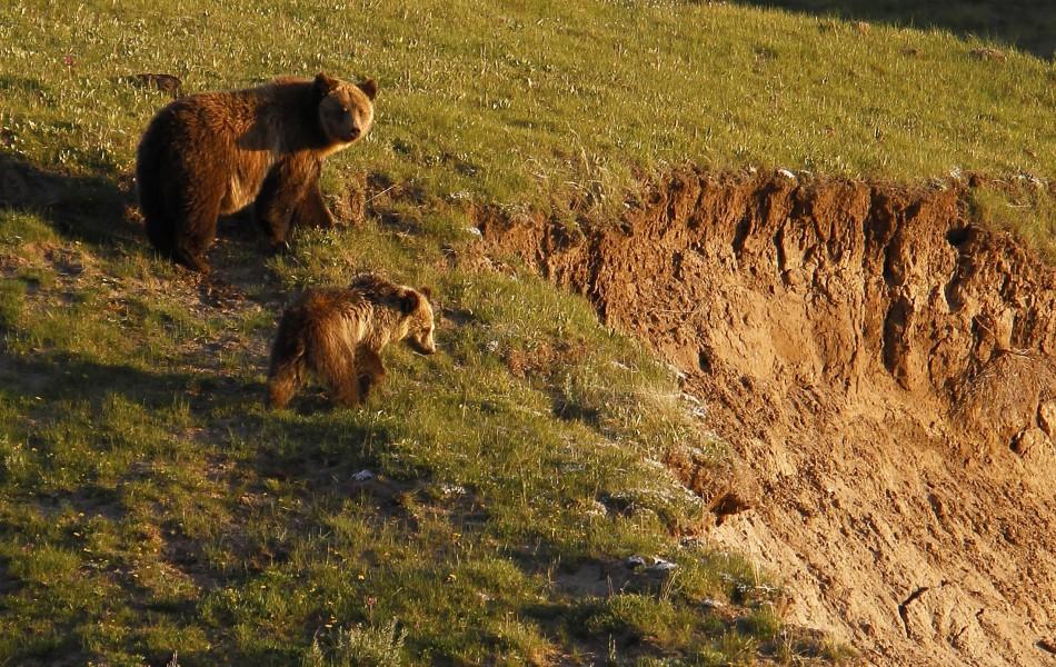 Yellowstone (9 of 15)
