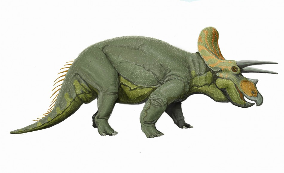 New Dinosaur Species From Early Jurassic Found In Italy ... |Triceratops Dinosaur