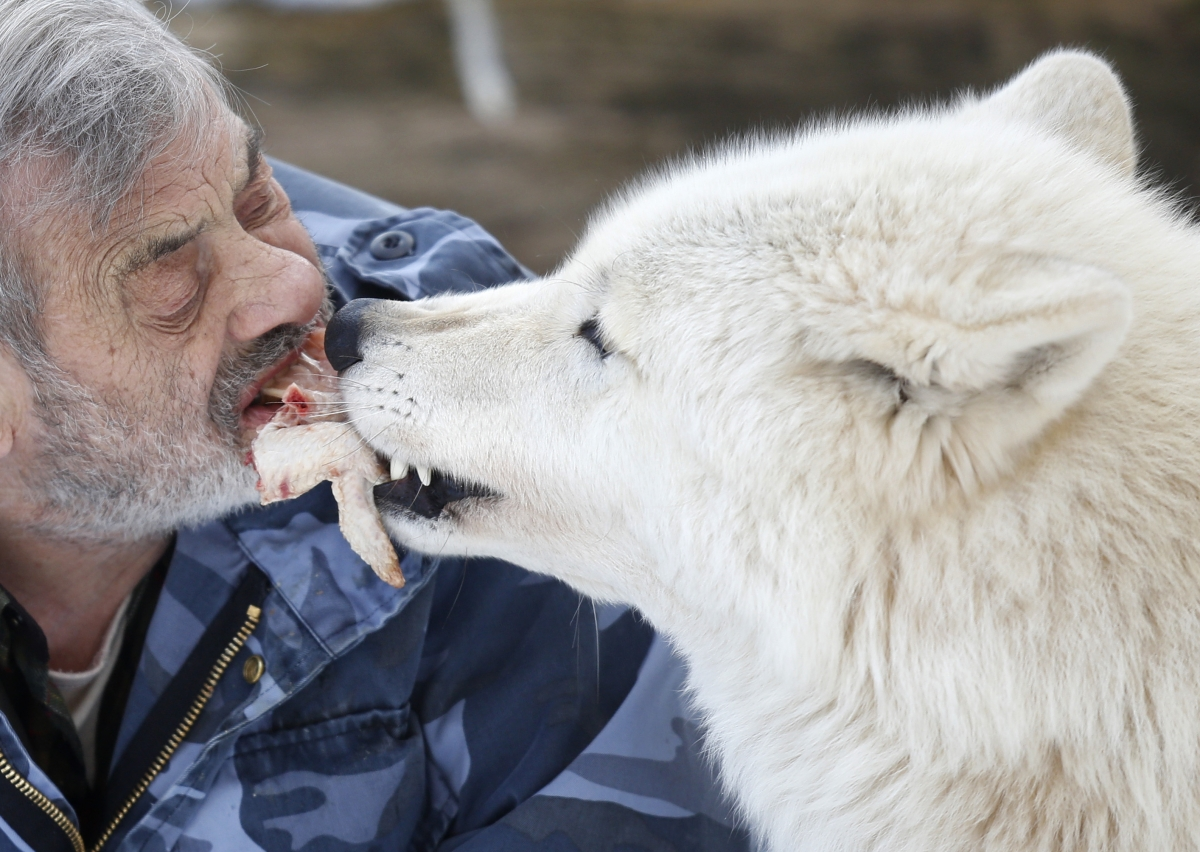 German man lives with wolves