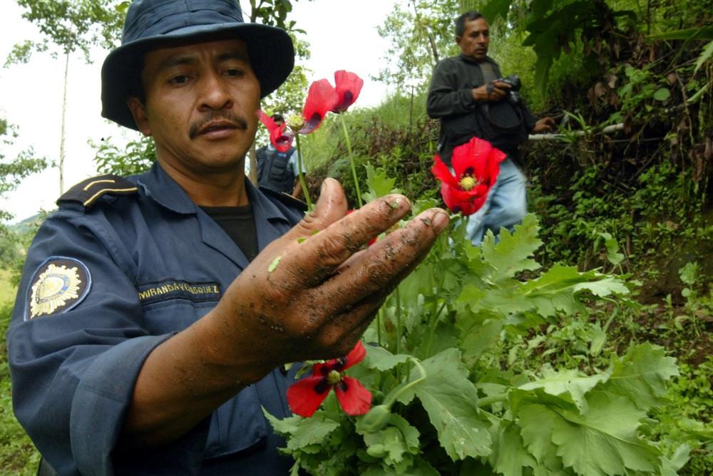 Guatemala Opium Production