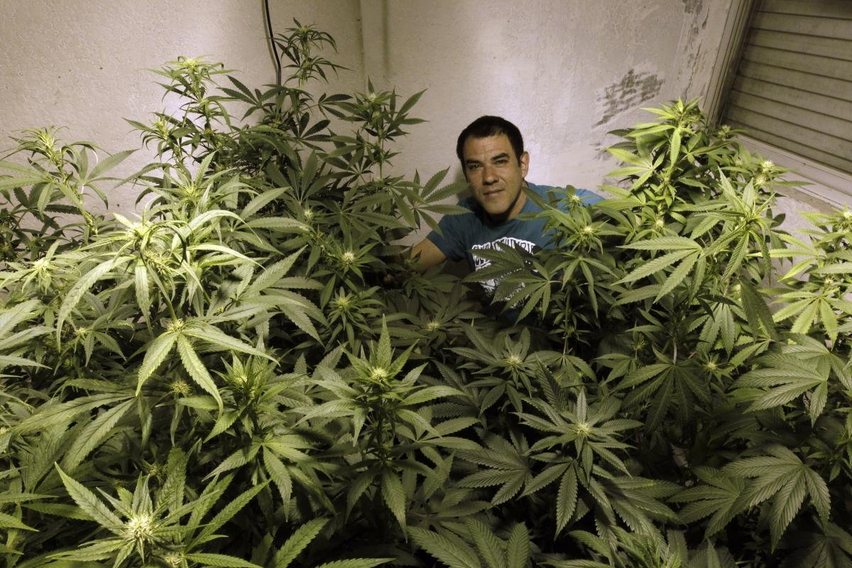 С марихуаны сойти от можно ума ли коноплю медведей про новости и