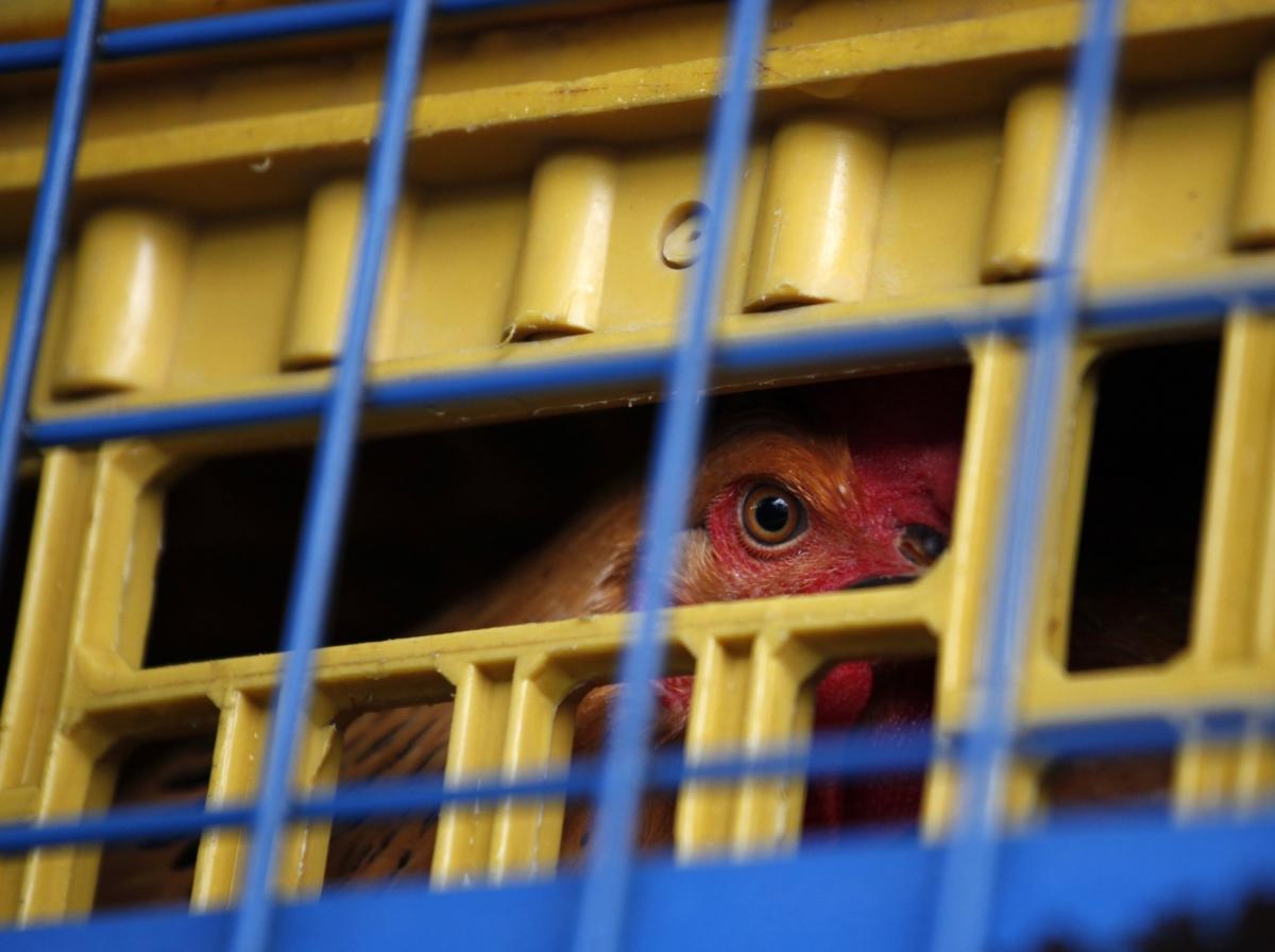 Bird Flu Hong Kong