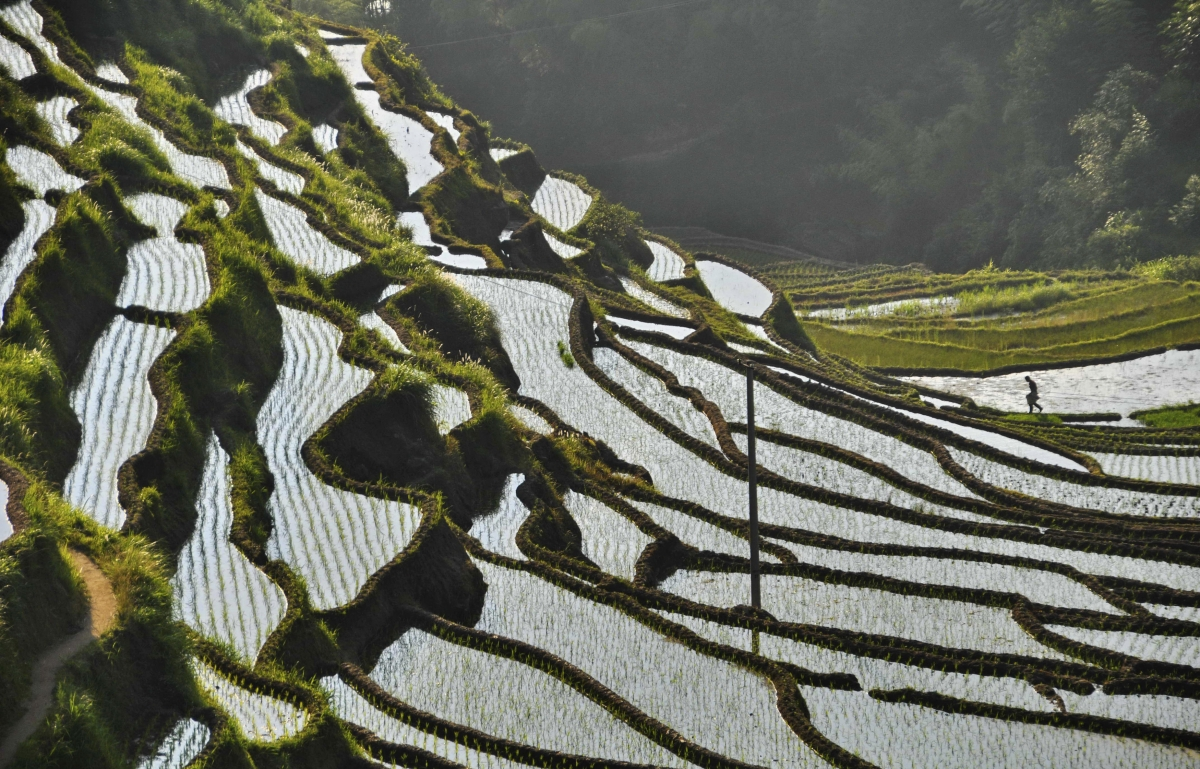 China paddy field