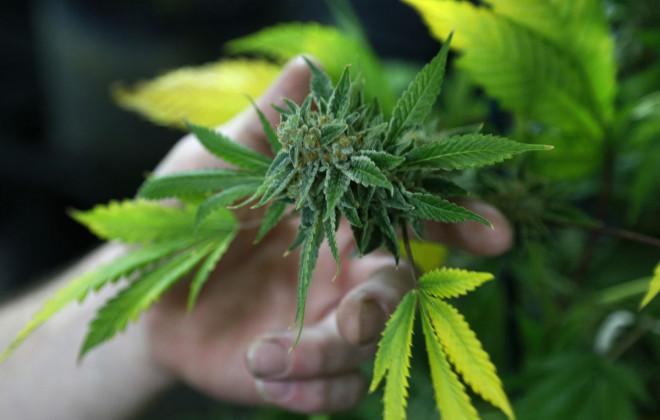 Marijuana Shoppers Flock to Colorado