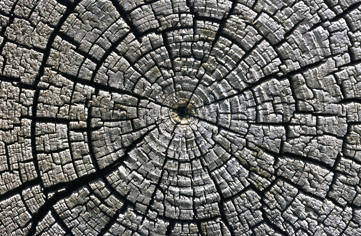 What is tree ring dating used for