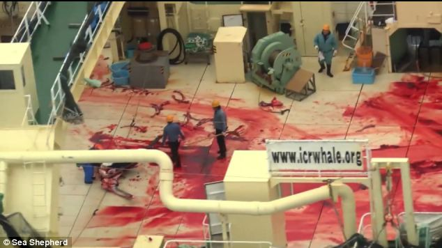 Blood on the decks of Japanese whaling boat captured in Southern Ocean Whale Sanctuary by Sea Shepherd