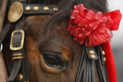 Romania horse