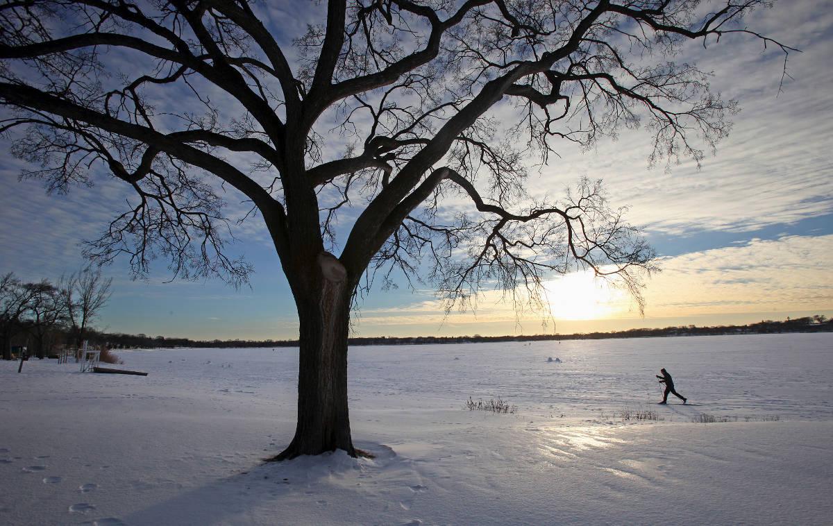 tree skier