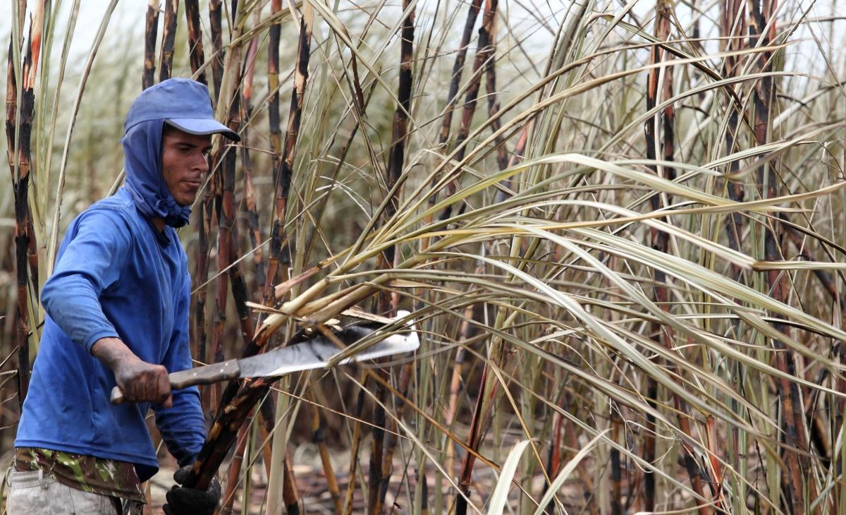Sugarcane Brazil