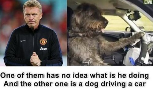 Dog driver moyes