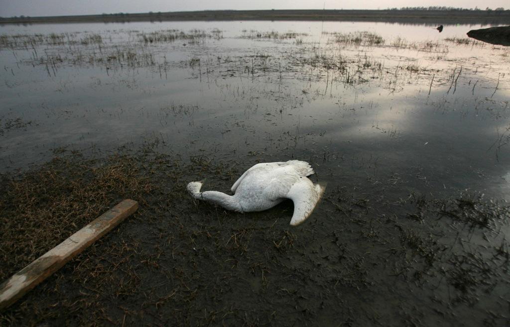 Fuhe Wetlands China