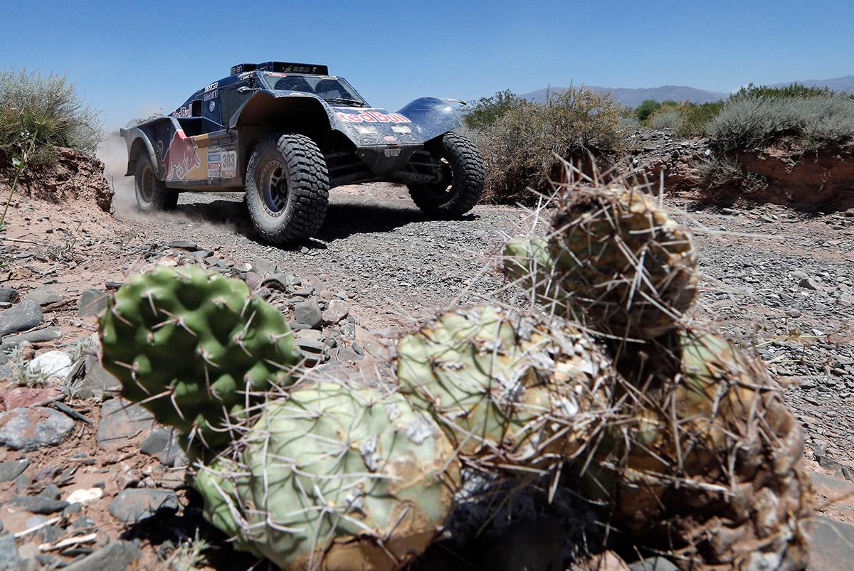20140107 cactus