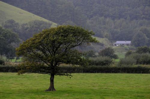 Rural UK broadband