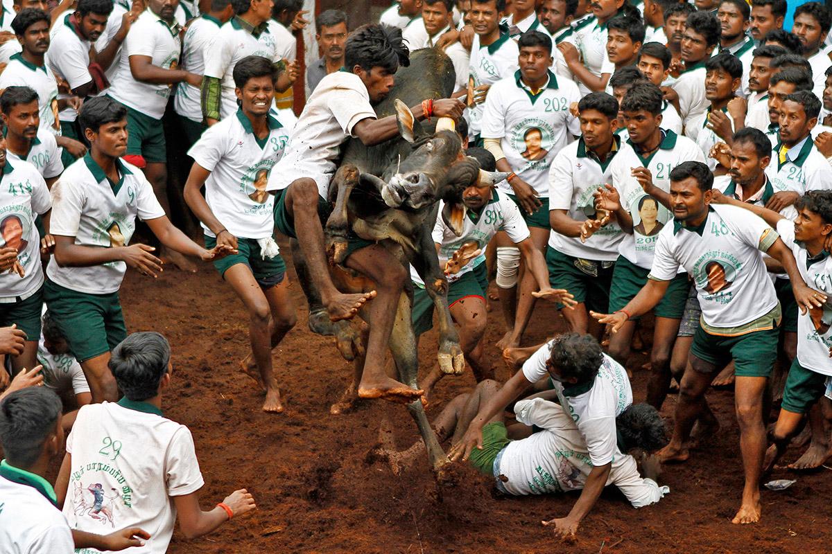 bull taming festival 10