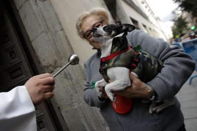 priest blesses dog