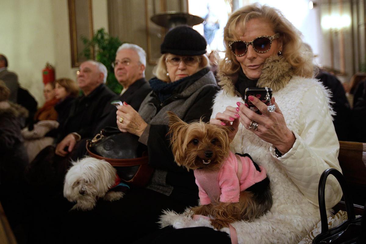 pets church