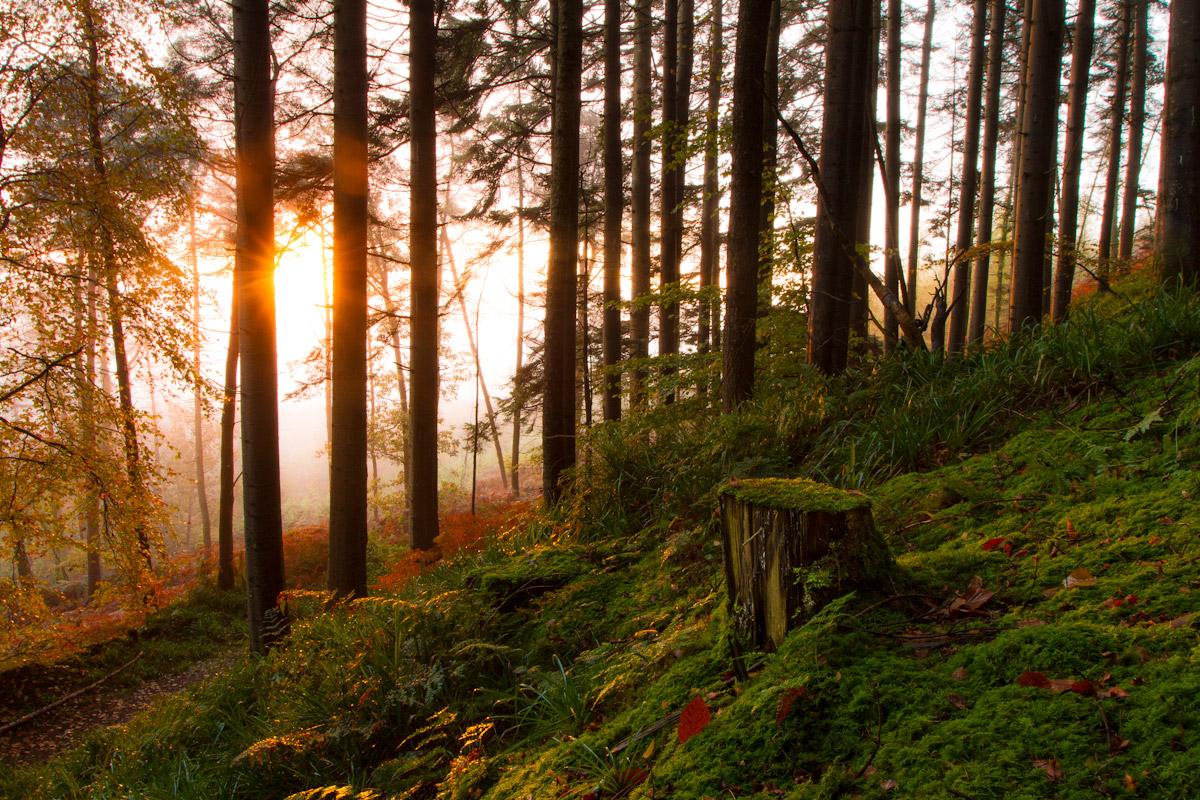 Michael Howard, Forest Light, Ireland