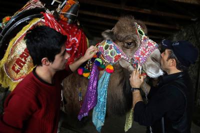 camel beauty kiss
