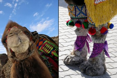 camel beauty detail