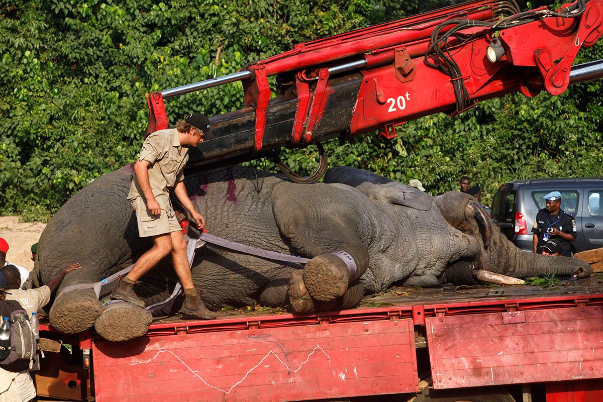 elephant truck