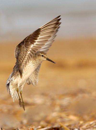 Category Five - Birds and the Bees. Junior Winner. LANDING GEAR by Alex Berryman c ZSL
