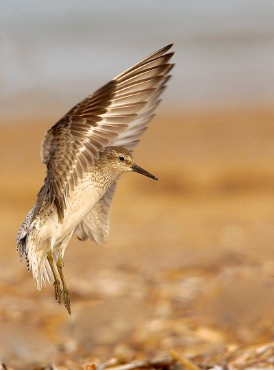 Category Five - Birds and the Bees. Junior Winner. LANDING GEAR by Alex Berryman c ZSL