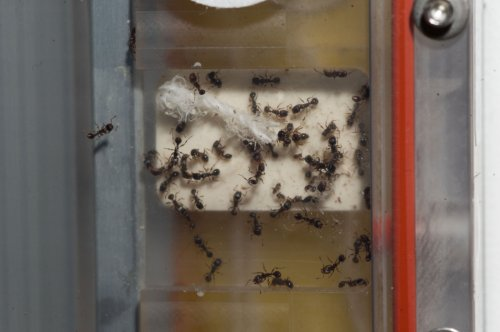 Ant experiment
