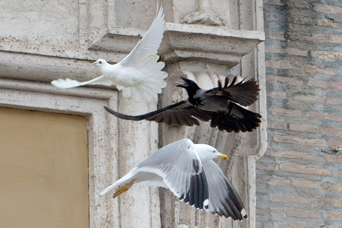 pope doves crow seagull