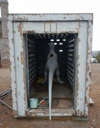 Velociraptor cage