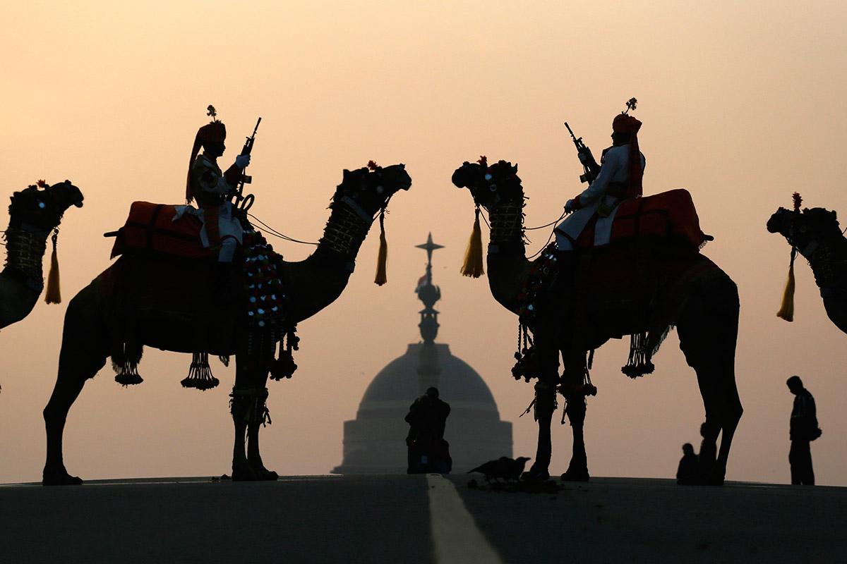 india camels