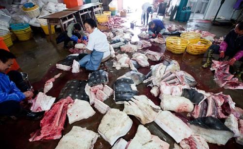 whale shark slaughter