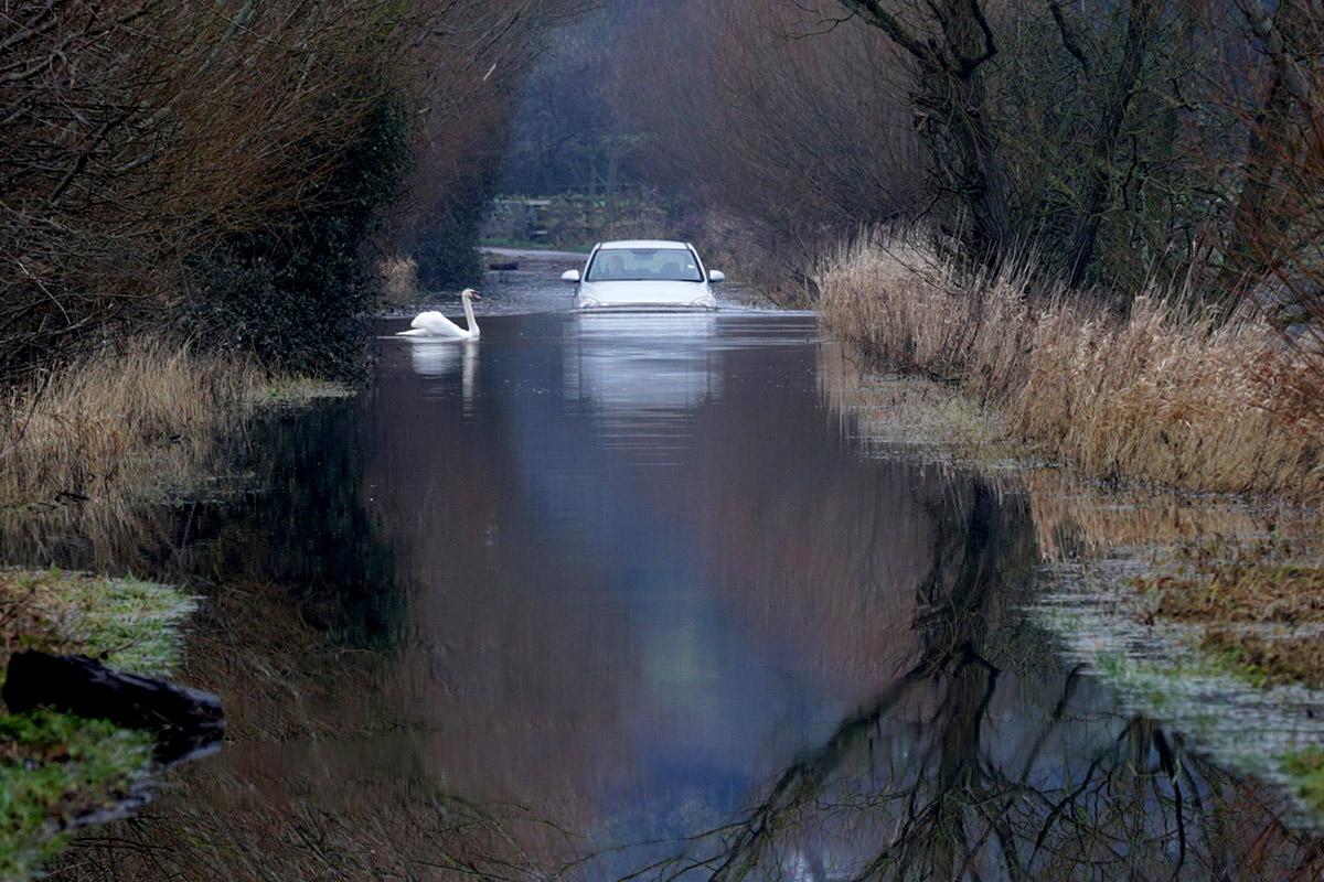 car swan